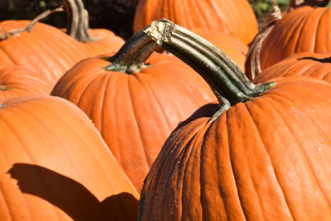 Photograph of pumpkins at Cranbrook