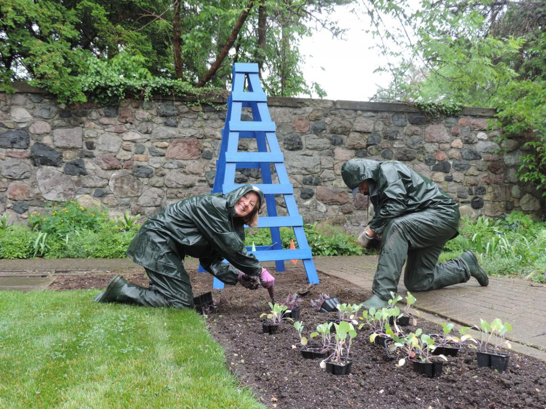 Photograph of two volunteers gardening in the rain in the Sunken Garden at Cranbrook House & Gardens.