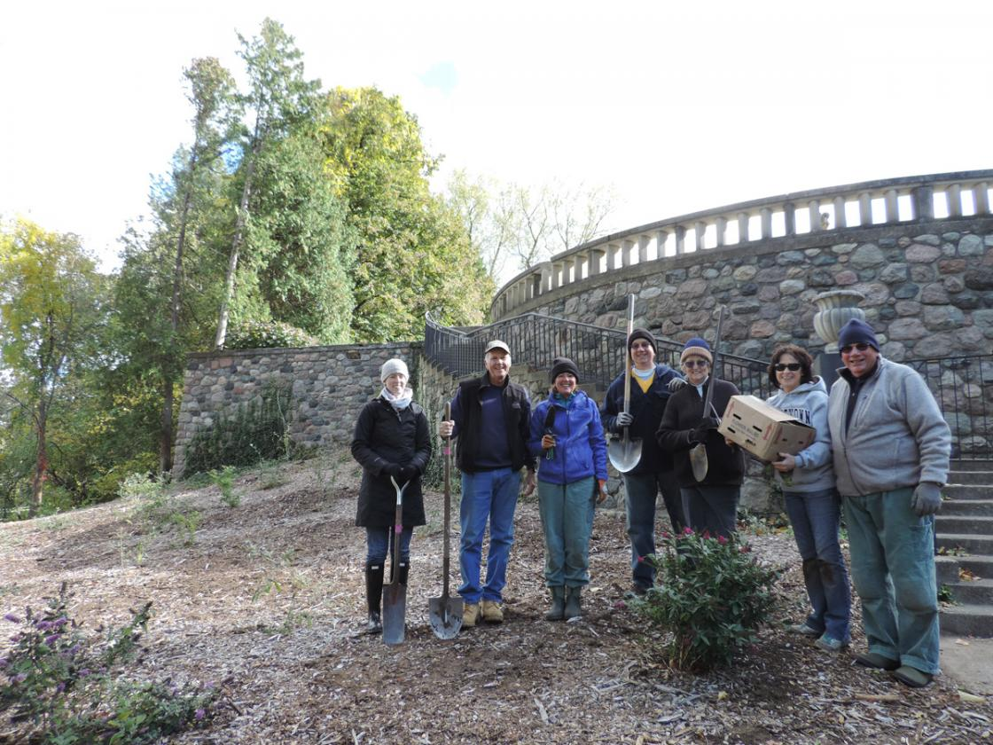 Photograph of Cranbrook House & Gardens Auxiliary volunteers planting daffodils on Daffodil Hill at Cranbrook House & Gardens, October 2015.
