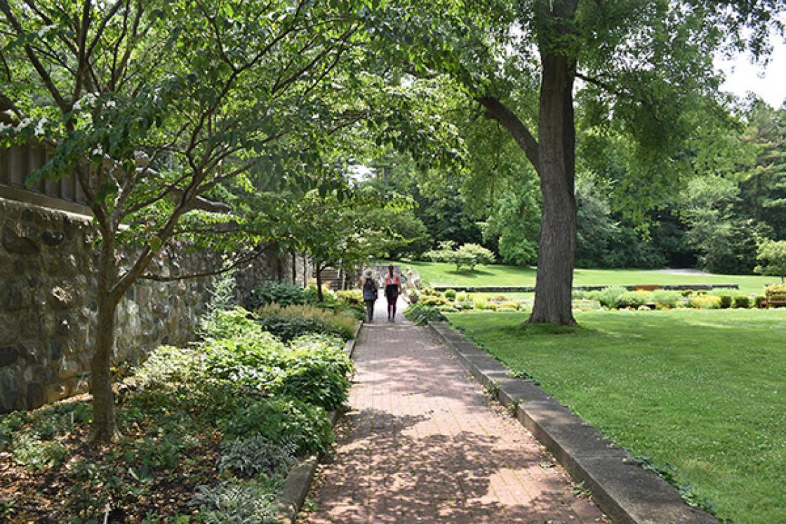 Photograph of two visitors walking through the Shady Walk at Cranbrook House & Gardens, summer 2019.
