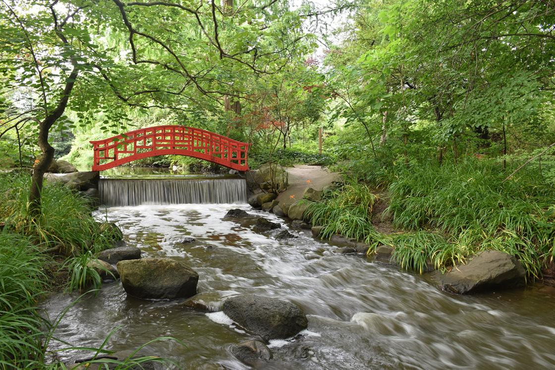 Photograph of the Japanese (Red) Bridge in the Japanese Garden at Cranbrook House & Gardens. Photograph taken by Eric Franchy, July 2019.