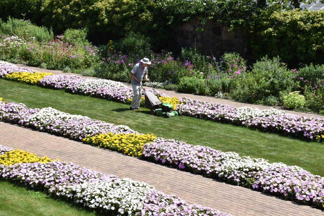 Photograph of a volunteer mowing the lawn in the Sunken Garden at Cranbrook House & Gardens, summer 2019.
