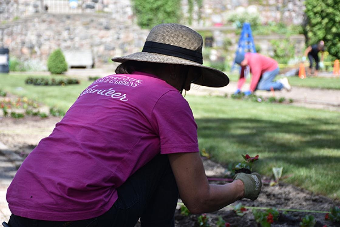 Photograph of a volunteer working in the Sunken Garden.