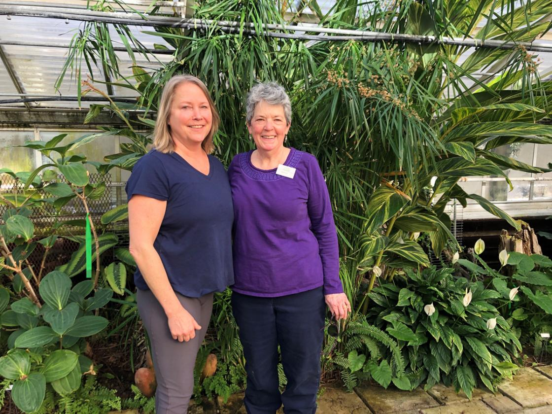 Photograph of two volunteers in the Conservatory Greenhouse at Cranbrook House & Gardens, February 2020.